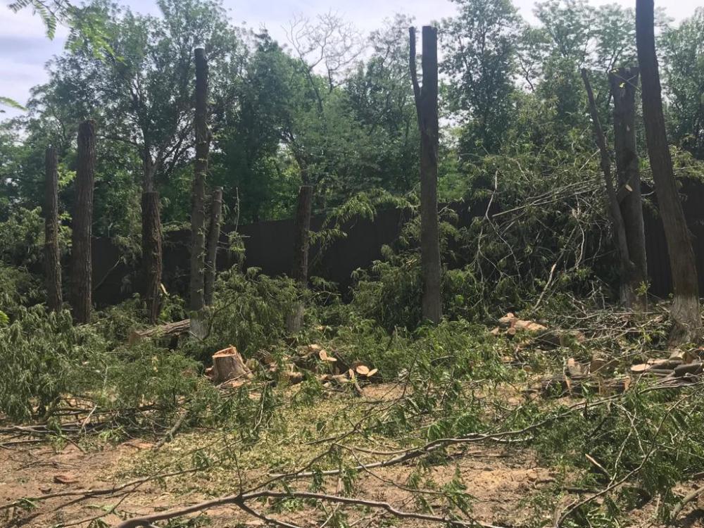 ВРостове наРаздорской остановили незаконную вырубку деревьев
