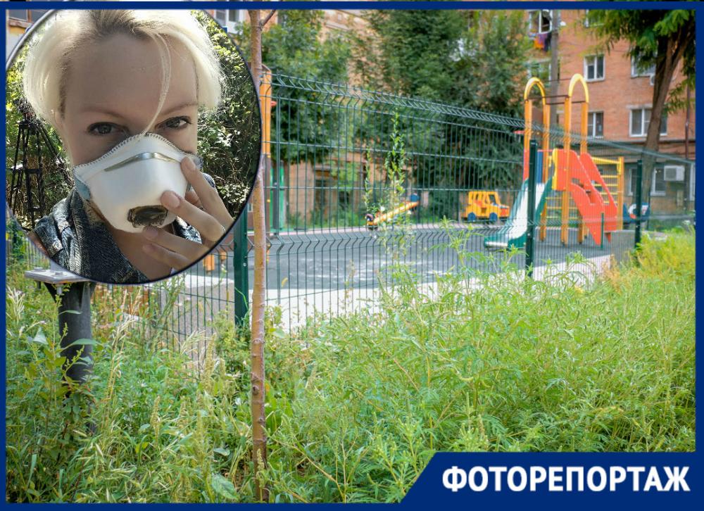 Карта позора коммунальщиков: где в Ростове разрослась амброзия