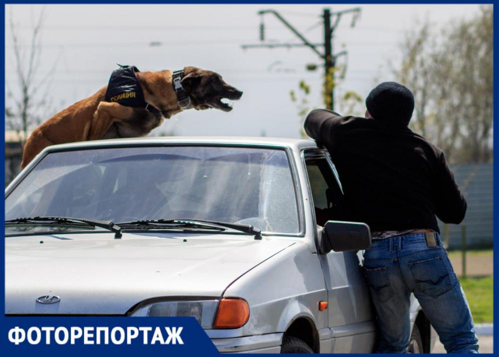 Ростовские кинологи иихпитомцы продемонстрировали навыки задержания опасных преступников