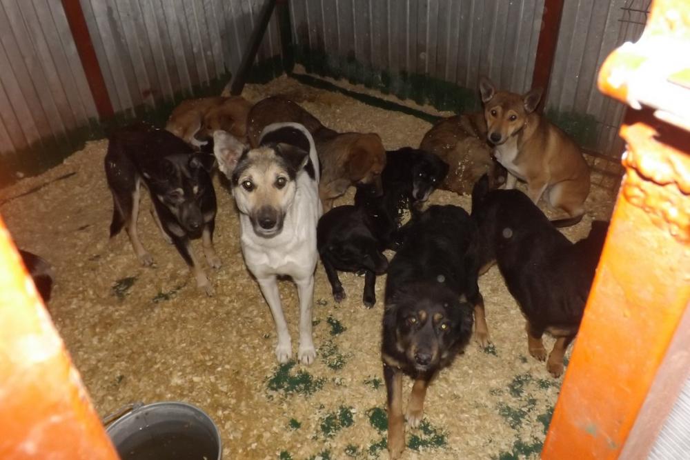ВНовошахтинске обвиняемые вубийстве 173 собак отделались штрафами