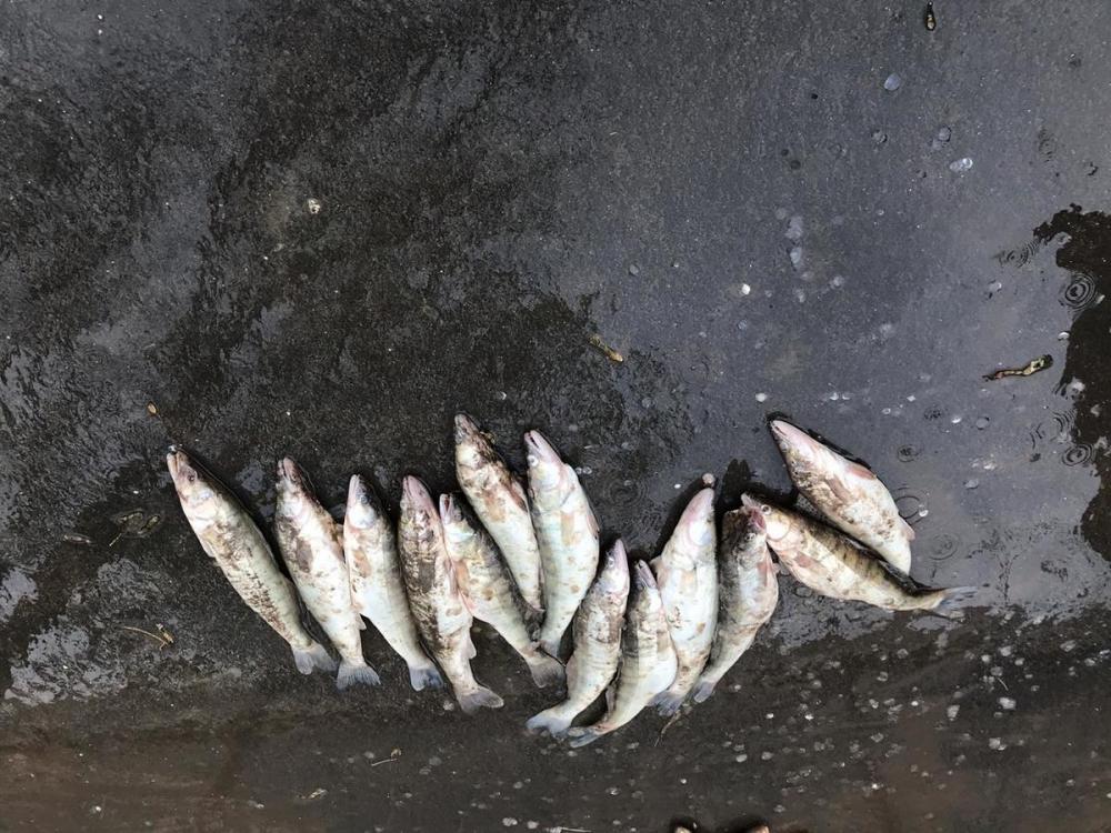 ВРостовской области задержали браконьера ссетями ирыбой на100 тысяч рублей
