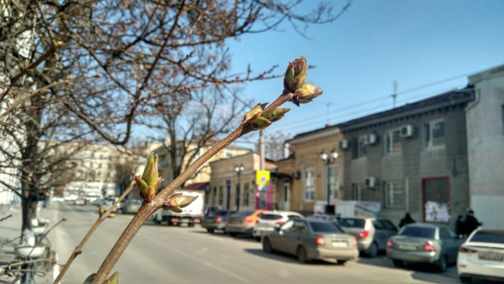 Ростов ждет потепления: прогноз погоды на вторник 26 марта