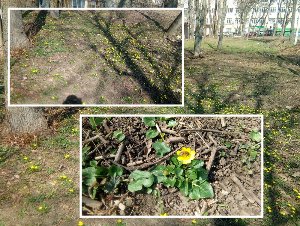 Ростовчане вслед за куличами поделились фотографиями расцветающего города