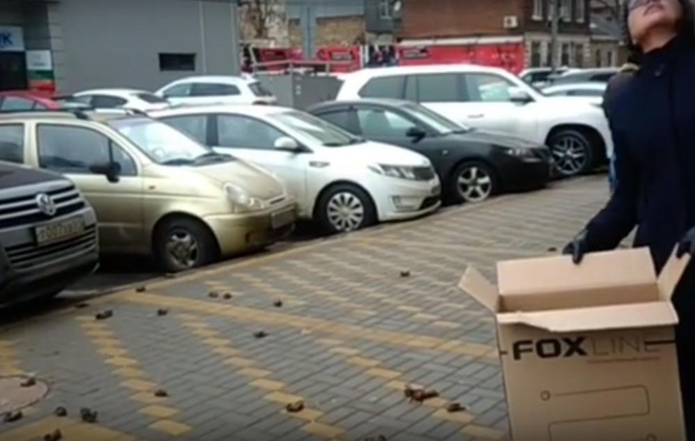 Массовая гибель летучих мышей в Ростове-на-Дону