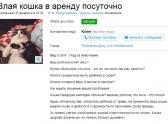 Необычное объявление об аренде злой кошки появилось в сети