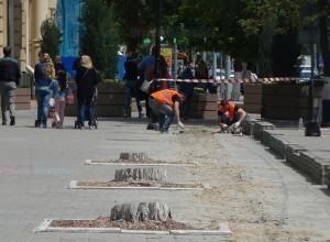 Спиленные в центре Ростова акации заменят новыми деревьями