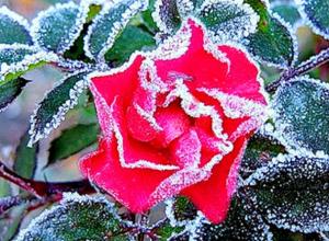 В середине недели Ростовскую область настигнут утренние заморозки
