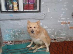 Красивый пес попал под машину после развода супругов в Ростове