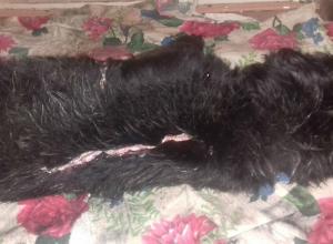 Подростки попытались живьем содрать шкуру с маленькой беззащитной собаки в Ростовской области