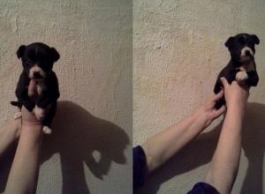 В Ростове неизвестные замотали скотчем щенка и бросили его умирать в мусорный бак