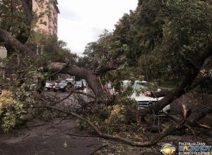 В Ростове из-за шквалистого ветра деревья придавили и повредили десятки машин. Видео