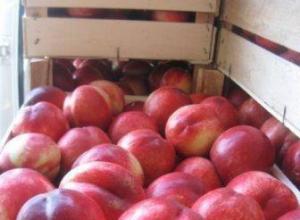 18 тонн нектаринов задержали на границе с Ростовской областью