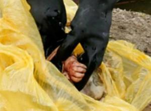 Мертвую новорожденную девочку «похоронили» в мусорном контейнере в Ростовской области