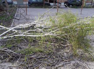 Уничтожение молодых берез на Батуринской в Ростове шокировало очевидцев