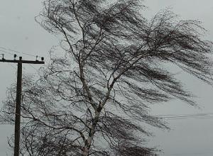 В Ростовской области объявлено экстренное предупреждение: порывы ветра достигнут 30 м/с