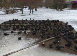 В Ростове-на-Дону произошел несанкционированный голубиный «митинг»