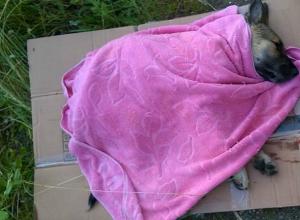Намеренный наезд на щенка не простили соседи живодерке из Ростова
