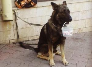 В Ростове пес-попрошайка зарабатывает деньги на косточки