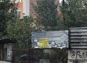Амброзия, бездомные собаки и бомжи не дают спокойно жить женщине в Ростове