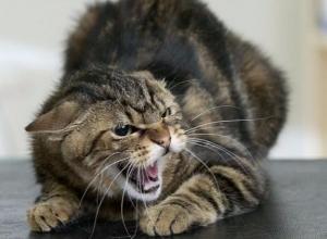 Домашняя кошка взбесилась и погибла в Ростовской области