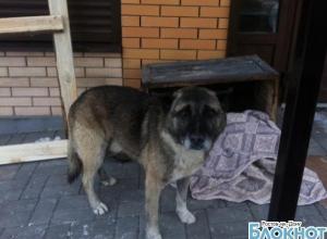 Донской Хатико: в Батайске пес больше года ждет хозяев, оставивших его возле дома