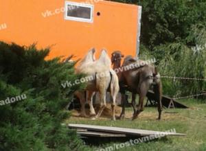 Жители Ростова возмущены тем, как цирк-шапито содержит своих животных
