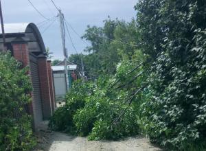 Ураганный ветер оборвал крышу и повалил деревья в Ростове