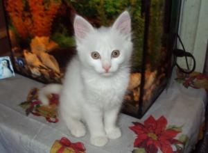 Невероятную сделку по продаже кота захотел провести житель Ростовской области