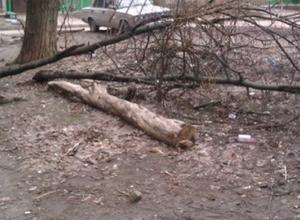 В Ростове-на-Дону дерево рухнуло на 36-летнего мужчину