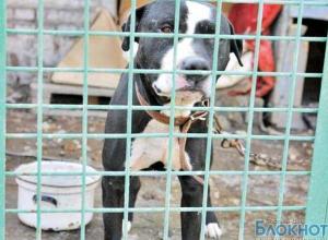Ростовские зоозащитники проиграли суд против Центра безнадзорных животных