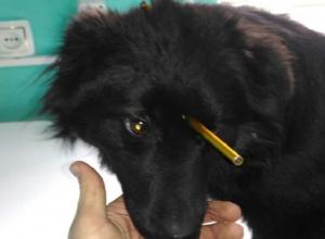 Живодеры проткнули трубкой насквозь голову собаки в Ростовской области