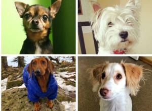 Объявляем победителей конкурса «Самый обаятельный пёс-2018»