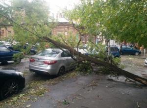 В Ростовской области двух человек придавило упавшими деревьями