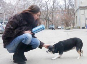 Куда девать бездомных животных, спросила Настя у жителей Ростова