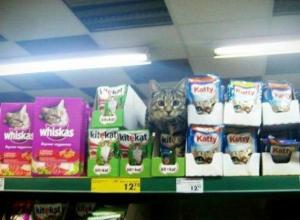 Полосатый «консультант» в отделе кошачьих консервов развеселил покупателей магазина в Ростове