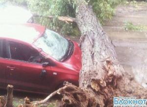 В Ростове из-за ураганного ветра падают рекламные щиты и деревья