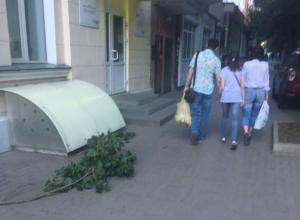 В ожидании новой трагедии из-за падающих деревьев бьют тревогу жители Пушкинской в Ростове