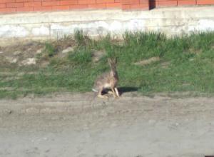Маленькое ушастое «чудо» заметила женщина на улице Ростова