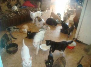 Дикая вонь из квартиры хозяйки 40 кошек свела с ума жильцов многоэтажки Ростова