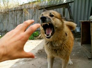 «Террористы» возле зоопарка Ростова встревожили собак и местных жителей