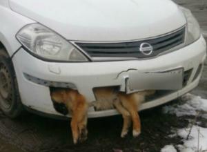 Единороссы объяснили наличие трупа в машине «потерявшего память» депутата из Ростовской области