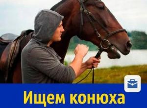 На постоянную работу требуется конюх