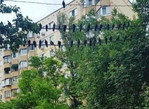 «Опасно» нависшая над иномаркой стая голубей до слез рассмешила «суеверных» жителей Ростова