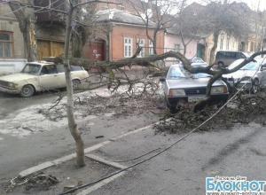 В Ростове-на-Дону упавшее дерево придавило две машины