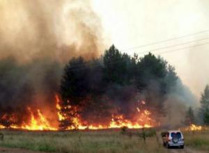 Более 15 часов тушили масштабный лесной пожар в Ростовской области