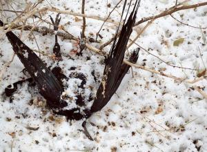 Ростовчане сообщают о массовой гибели птиц в Ботаническом саду ЮФУ
