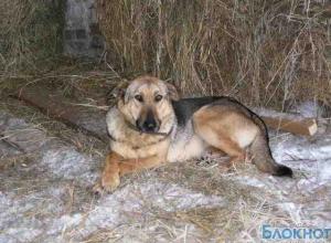 В Волгодонском районе оштрафовали хозяйку собаки, укусившей прохожего