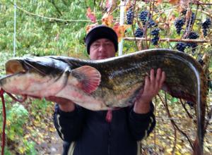 Пойманным на квок колоссальных размеров сомом ростовский рыбак похвастал на видео