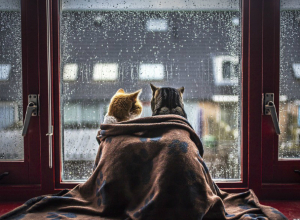 Проливной дождь со снегом обрушатся на жителей Ростова в этот вторник
