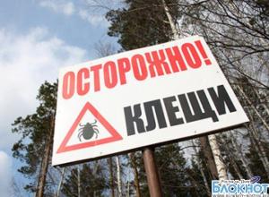 В Ростовской области с начала года от укуса клещей пострадал 121 человек